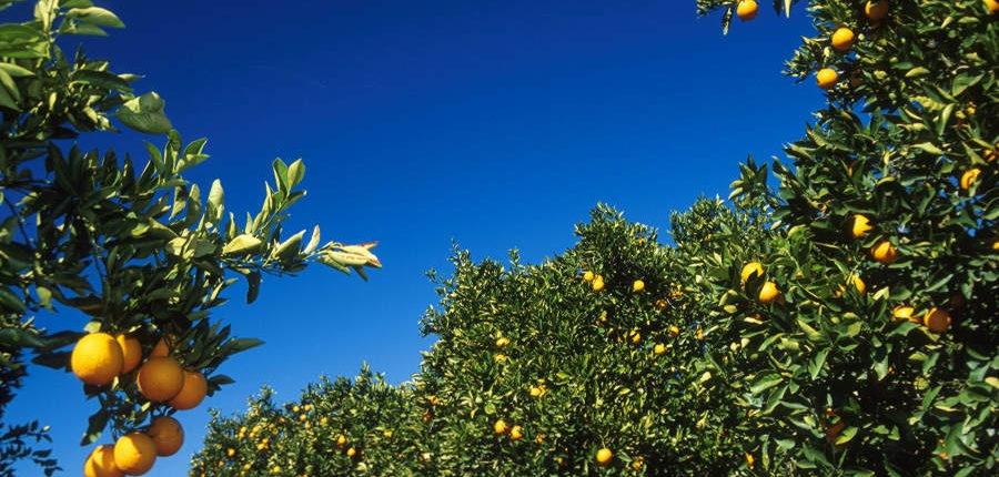 Citrusdal citrus wêreld