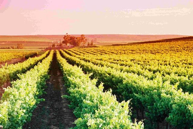 Lutzville Vineyards
